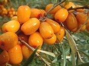 Облепиховое масло(фарм субстанция)
