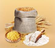 Продам муку пшеничную из Казахстана